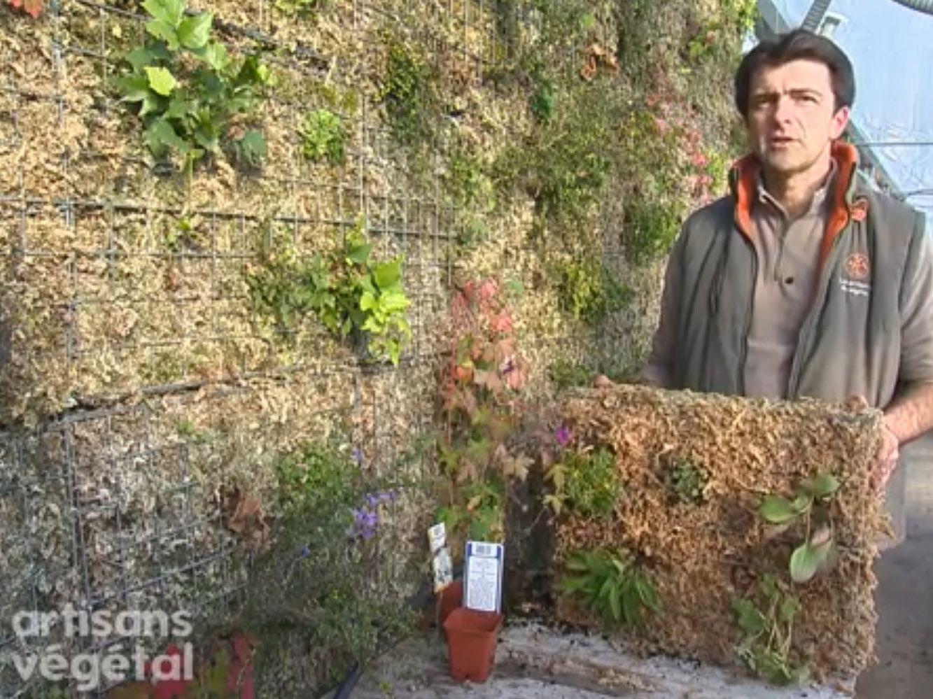 Creation Mur Vegetal Exterieur comment faire un mur végétal ?